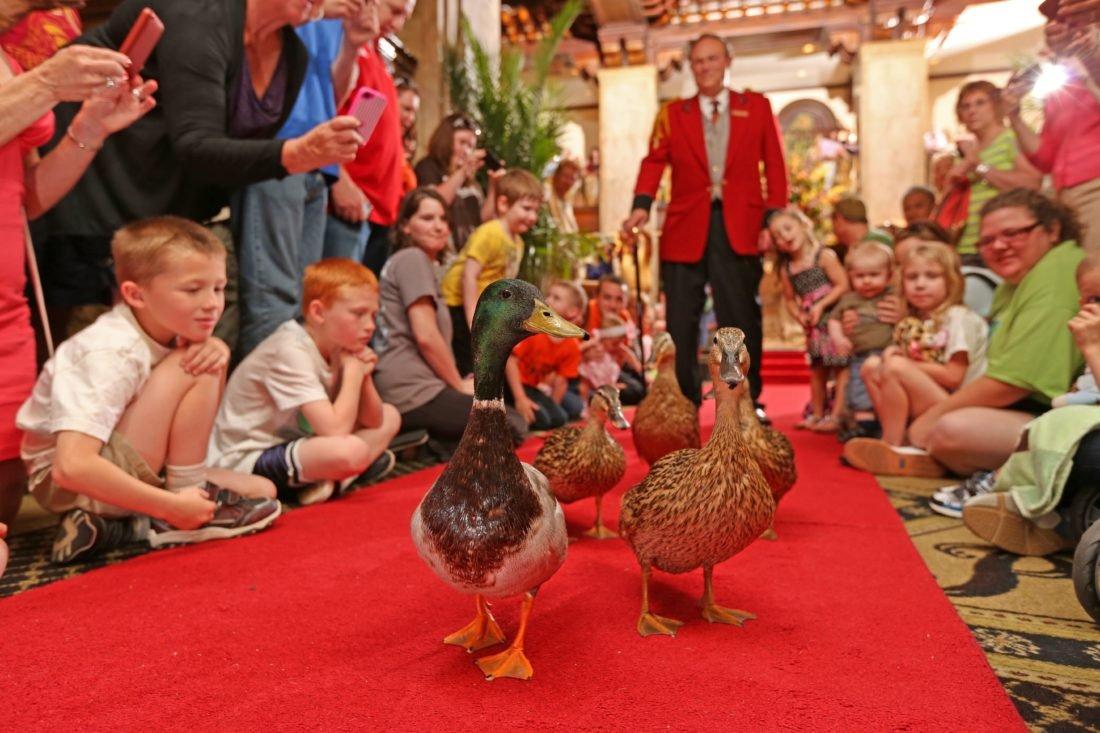 Peabody Ducks as date ideas in Memphis