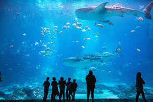 Georgia Aquarium - Atlanta Date Ideas