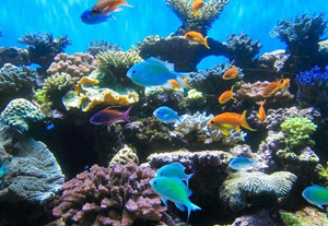 Birch Aquarium at Scripps - San Diego Date Ideas
