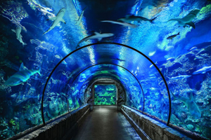 Shark Reef - Tucson Date Ideas